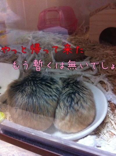 iphone_20111213224633.jpg