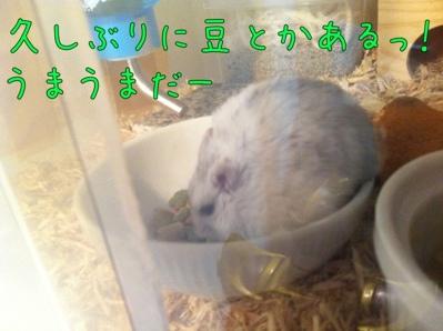 iphone_20120116212549.jpg
