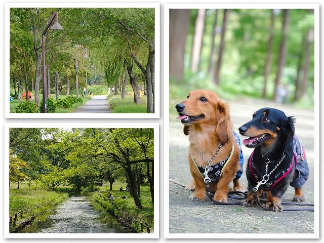 お散歩☆水元公園