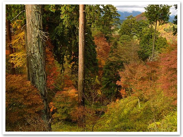 紅葉狩り【御岳山】