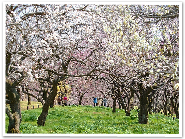 武蔵丘陵森林公園
