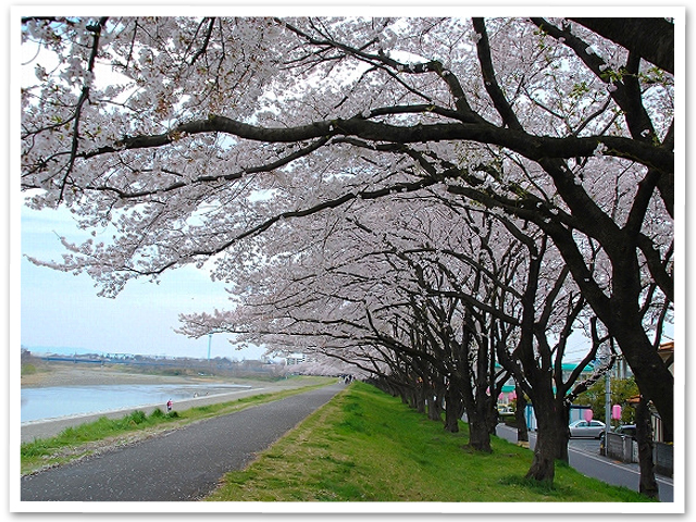お散歩☆多摩川中央公園
