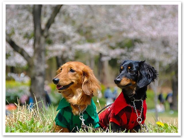 お散歩☆森林公園