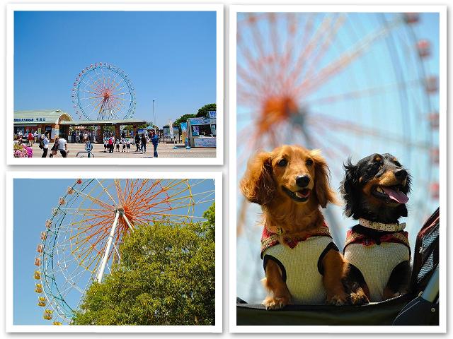 茨城ひたち海浜公園