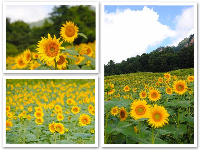 岩山の向日葵と榛名湖