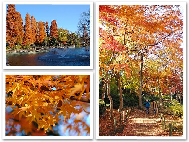 お散歩☆井の頭公園