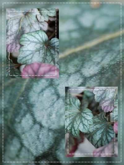 12_20110125155335.jpg