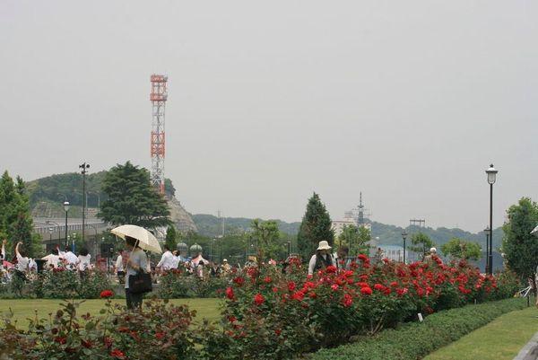 薔薇フェスタ-1