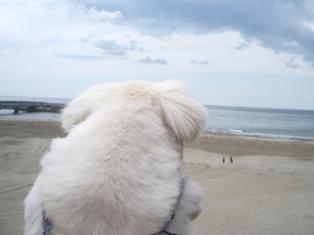 海を観る華