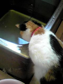 お魚いないのか?