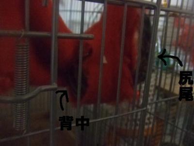 006_convert_20100216110849.jpg