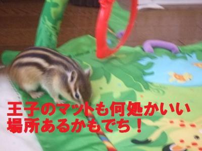012_convert_20100211074204.jpg