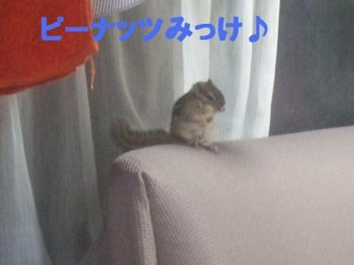 031_convert_20100402100036.jpg