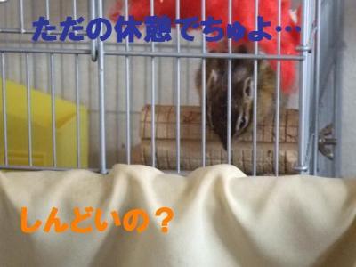 072_convert_20100228150324.jpg