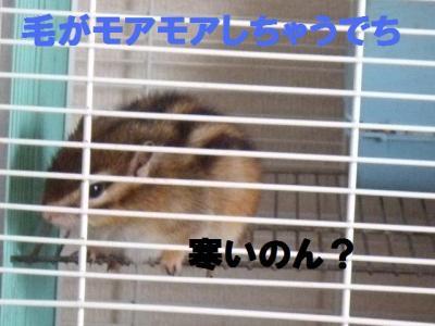 073_convert_20100228150352.jpg