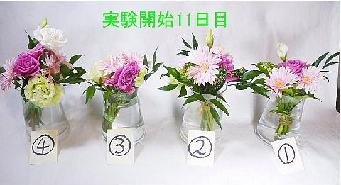 conv0004_20100612161232.jpg