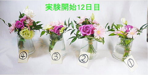 conv0005_20100612161241.jpg