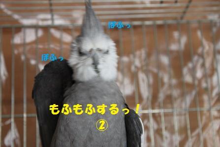 なんの生き物?(笑