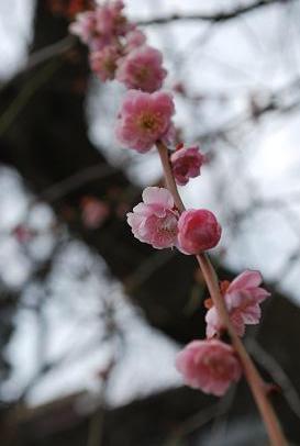 2010.3.12-13 なほと京都の旅 094
