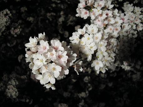 2010.4.18 池田町クラフトフェア 023