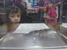 gecko1.jpg