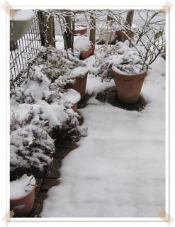 今シーズン2度目の積雪2012