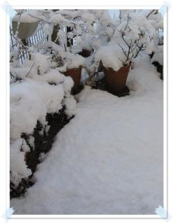 2012初雪!ドカッときました