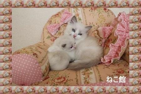 blog4_20131202125704160.jpg