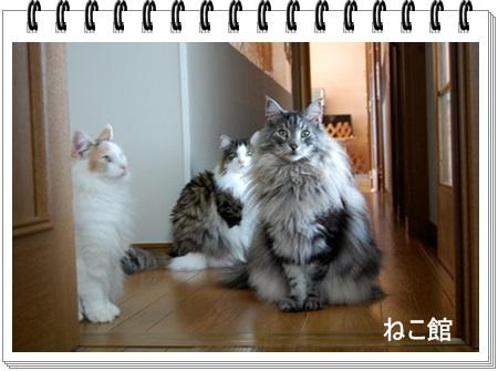 blog4_20141029145110bbe.jpg