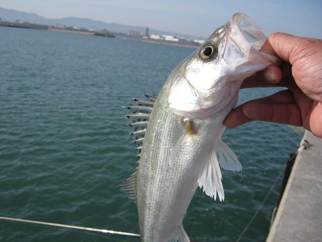 久しぶりに日中に遊びに来てくれた銀色のお魚さま♪