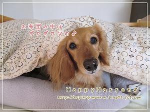 ぽかぽかベッド2