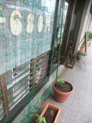 クロスFM 緑のカーテン ハピネス寅屋