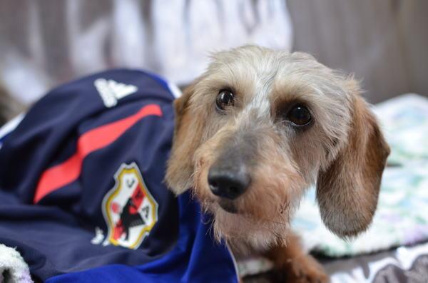 サッカー犬2
