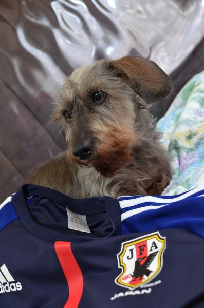 サッカー犬1