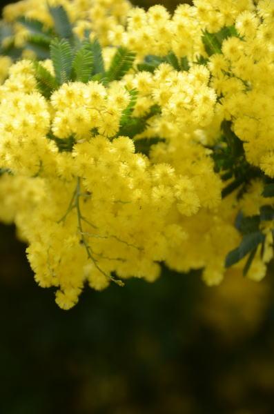 花の競演2