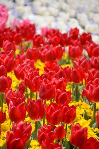 花の競演3