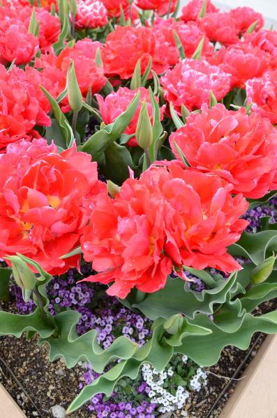 花の競演4
