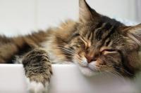 ★200お風呂で寝るcat