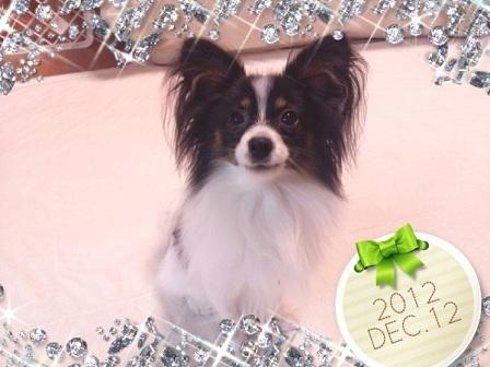 コピー ~ 2012-12-12