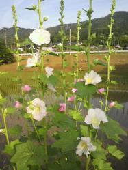 20110606あおい~♪2