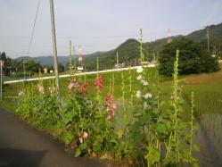 20110606あおい~♪