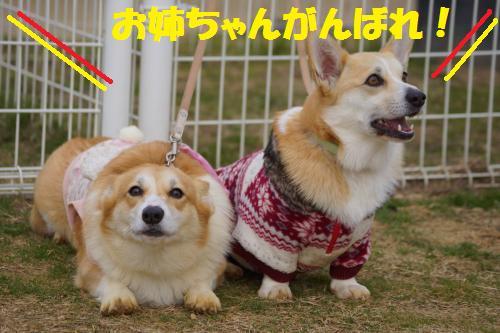 048_convert_20140201232514.jpg