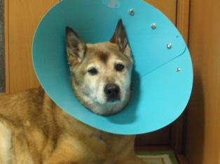 1度目の手術後