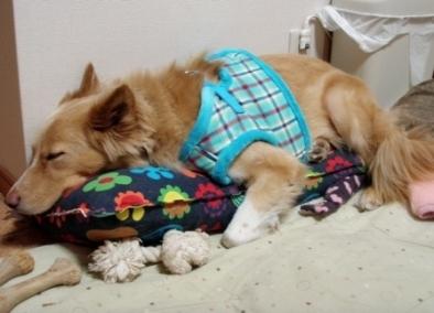 ヘレン枕がお好き♪