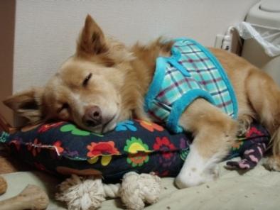ヘレン枕がお好き♪2