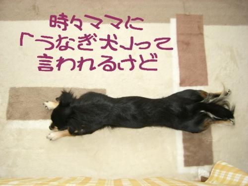 うなぎ犬1