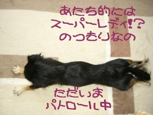 うなぎ犬2