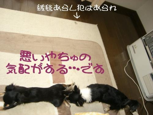 うなぎ犬3