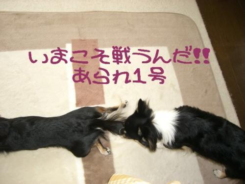 うなぎ犬4