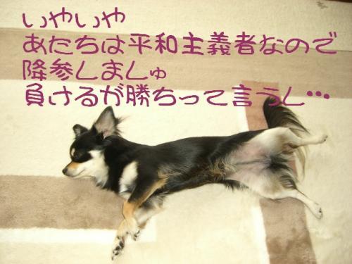 うなぎ犬5